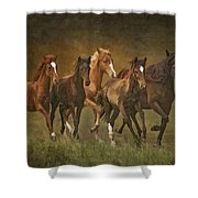 Paso Peruvians Shower Curtain
