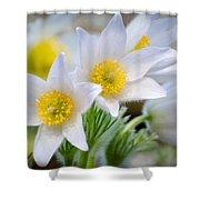 Pasque Flower Shower Curtain