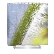 Pasqueflower Stem  Shower Curtain