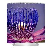 Passiflora Alata - Ruby Star - Ouvaca - Fragrant Granadilla -  Winged-stem Passion Flower Shower Curtain