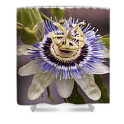Passiflora Caerulea Shower Curtain