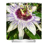 Passiflora Close Up With Garden Background  Shower Curtain