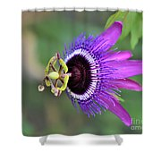 Passiflora Lavender Lady Shower Curtain