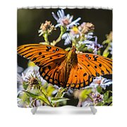 Passion Butterfly Shower Curtain