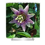 Passion Flower 4 Shower Curtain