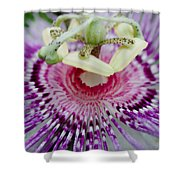 Passion Flower In Bloom Shower Curtain