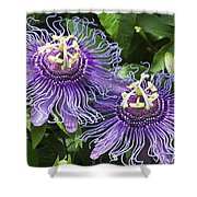 Passion Flowers Shower Curtain