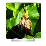 Passion Fruit 10-18-13 By Julianne Felton Shower Curtain