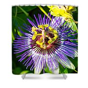 Passion Fruit Flower Shower Curtain
