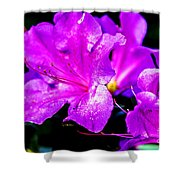 Passion Of Purple Shower Curtain