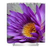 Passionate Purple Water Lily Shower Curtain