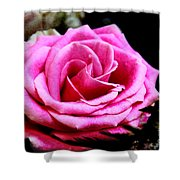 Passionate Rose Shower Curtain