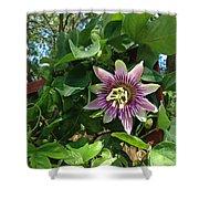 Passion Flower 3 Shower Curtain