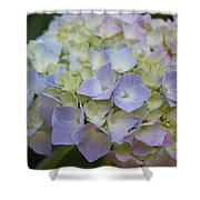 Pastel Blue Hydrangea Shower Curtain