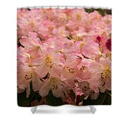 Pastel Coral Azaleas Refreshed By The Rains Shower Curtain