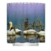 Pastel Morning  Shower Curtain