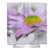 Pastel Mums Shower Curtain