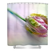 Pastel Parrot Tulip Shower Curtain