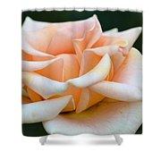 Pastel Peach Rose Shower Curtain
