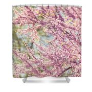 Pastel Pink Flowers Of Redbud Tree In Springtime  Shower Curtain