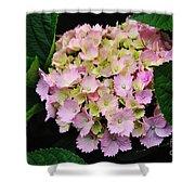 Pastel Pink Hydrangea Shower Curtain