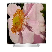Pastel Pink Mallow Shower Curtain