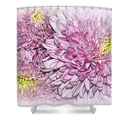Pastel Pink Mums Shower Curtain