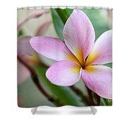 Pastel Pink Plumeria Shower Curtain