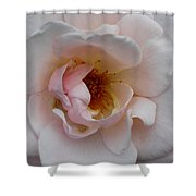 Pastel Pink Rose Shower Curtain