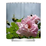 Pastel Pink Roses With Bee Shower Curtain