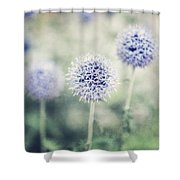 Pastel Purple Allium Bulbs Shower Curtain