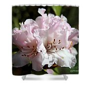 Pastel Springtime Shower Curtain