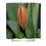 Pastel Tulips Buds Shower Curtain