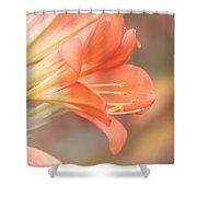 Pastels Shower Curtain by Kim Hojnacki