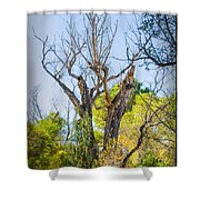 Patagonia 27 Shower Curtain