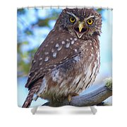 Patagonia Pygmy Owl Shower Curtain