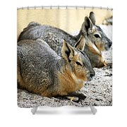 Patagonian Cavies Shower Curtain