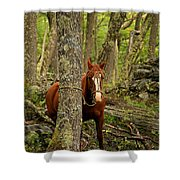 Patagonian Packhorse Shower Curtain