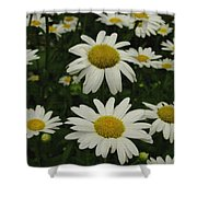Patch Of Daisies Shower Curtain