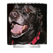 Patchwork Black Lab Closeup Shower Curtain