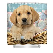 Patchwork Puppy Dp793 Shower Curtain by Greg Cuddiford