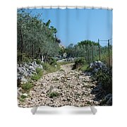 Path Among Olive Trees Shower Curtain