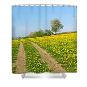 Path In Dandelion Meadow  Shower Curtain