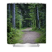 Path In Dark Forest Shower Curtain by Elena Elisseeva