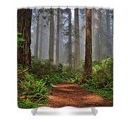 Path Thru The Redwoods Shower Curtain