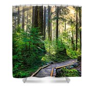 Pathway Into The Light Shower Curtain