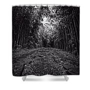 Pathway Through A Bamboo Forest Maui Hawaii Shower Curtain
