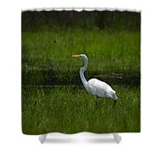 Patience - Egret Shower Curtain