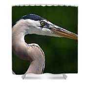 Patience Is A Virtue Shower Curtain