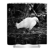 Patience Number 1 Shower Curtain